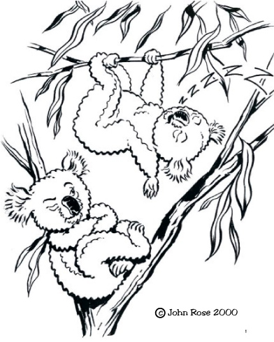 Coloring Books With Focus On Animals